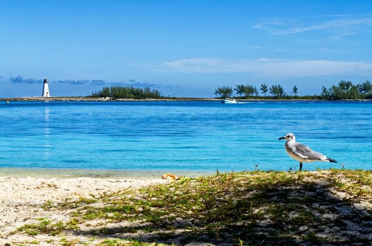 やっと着いたセブ島